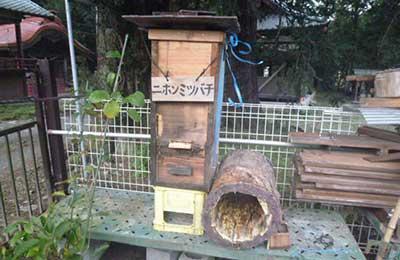 ミツバチの家