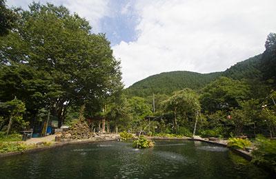 のんびり楽しむ大きく深い池