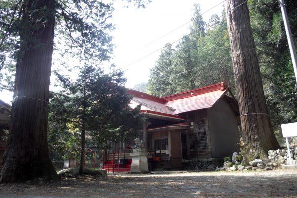 地守神社の大杉