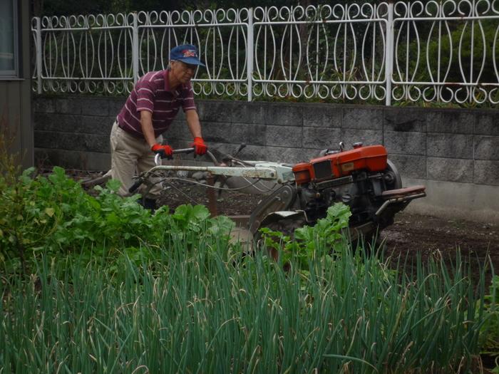無農薬野菜の栽培