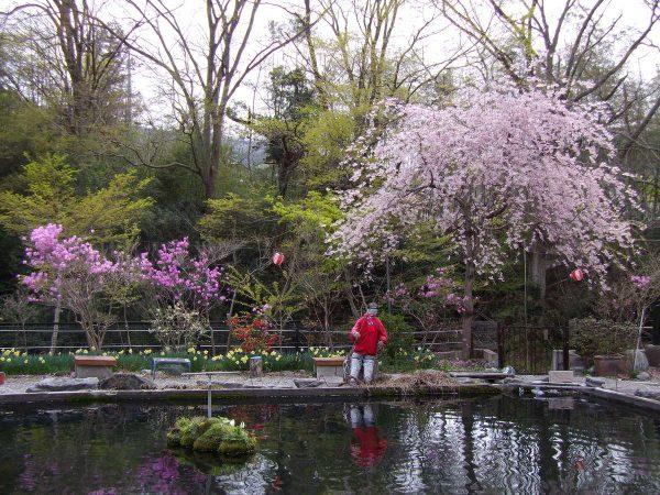 花々の咲き乱れサムネイル